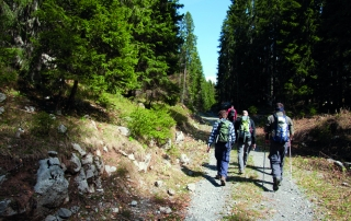 group mountaineers hiking in the forest
